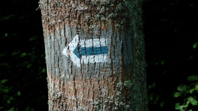 Przez lasy i wąwozy śladami dawnych Prusów