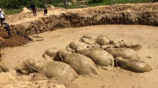 Słonie uwięzione w kraterze po bombie. Zobacz ich ucieczkę